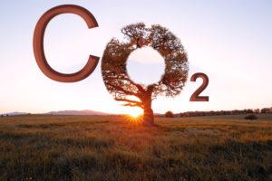 bp Target Neutral contribue à atteindre la neutralité carbone dans le monde