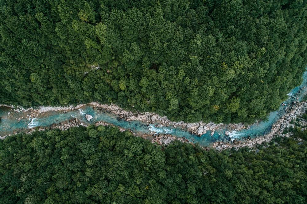 bp acquiert une participation majoritaire dans la société de compensation du carbone forestier Finite Carbon