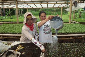 Le projet biogaz domestique en Indonésie