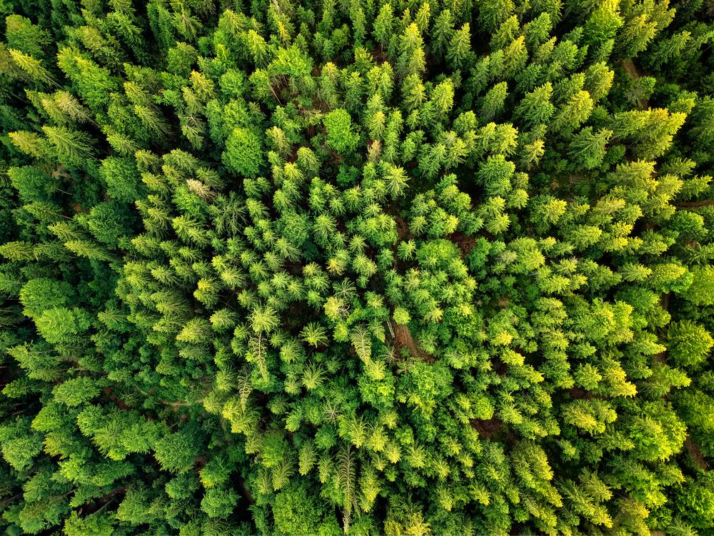Qu'est-ce que la neutralité carbone et comment l'appliquer à son niveau ?